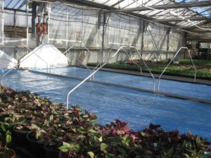 Nappes chauffantes pour utilisation horticole. // Heated tablecloths for horticultural use.